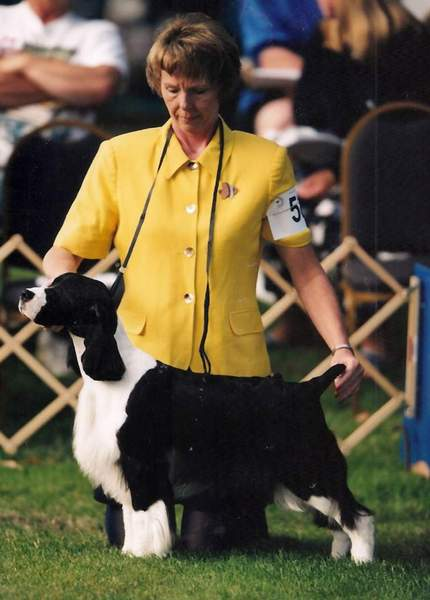 English Springer Spaniel image: Ch Suncoast In The Dark
