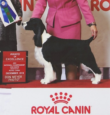 Luci - Award Of Merit - Royal Canin National Championship