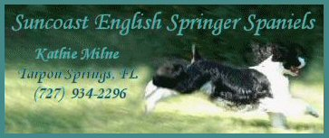 Suncoast English Springer Spaniels; Kathie Milne, Tarpon Springs, Fl (727) 934-2296